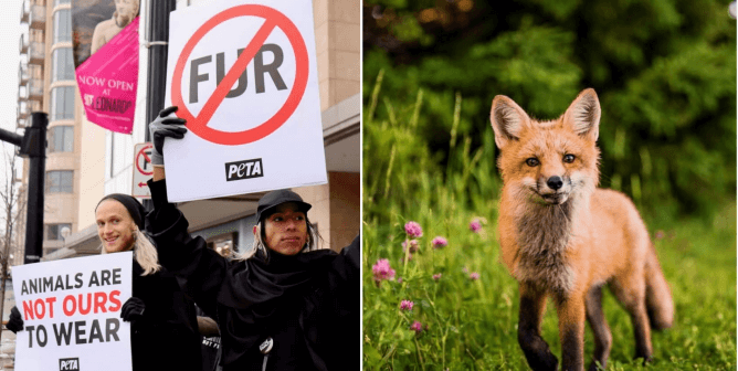 Local Activists Lead Charge to Win Over Winners—TJX-Owned Companies Are All Finally Fur-Free!