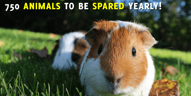 Victory! EPA Stops Requiring Use of Animals in Pesticide Test
