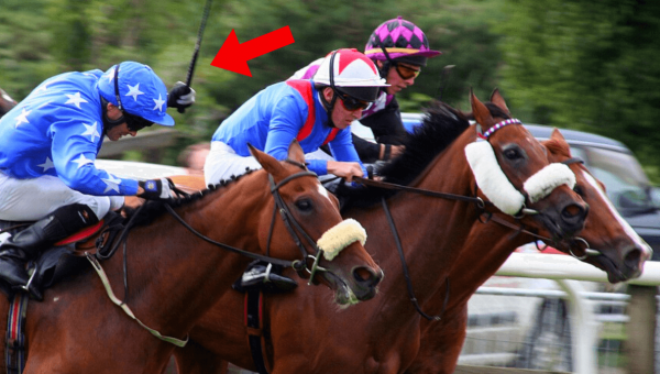 Horses in New York Are Being Beaten to Run Faster—Take Action NOW