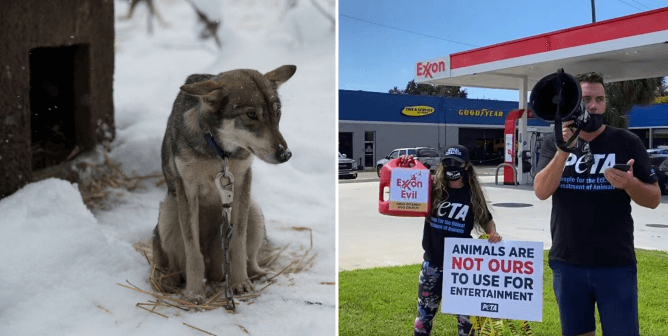 WATCH: PETA Supporters Spill 'Blood' to Send Exxon an Important Message