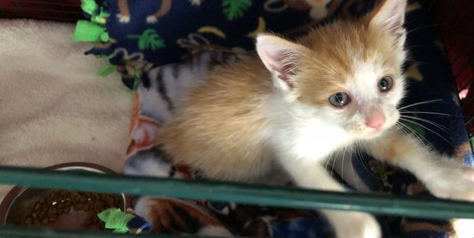 It Was a Dirty Job, but Someone Had to Save This Kitten