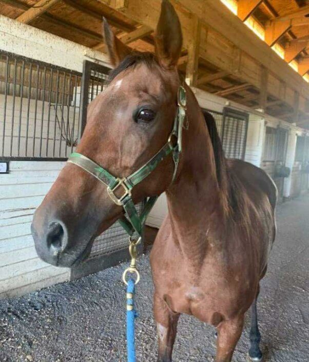 former racehorse Pastel saved from slaughter
