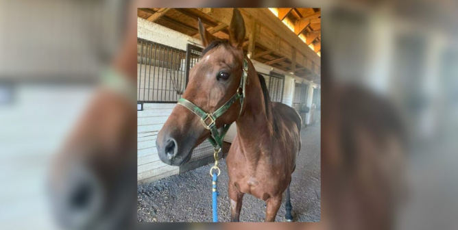 From Racetracks to Refuge—This Thoroughbred's Rescue Story Will Melt Your Heart