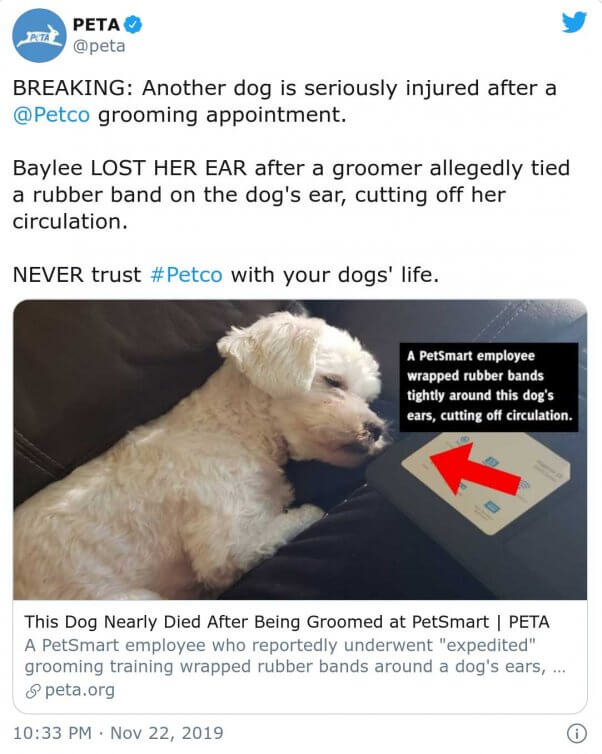 Petco groomer tied a rubber band around the ear of a dog named Baylee