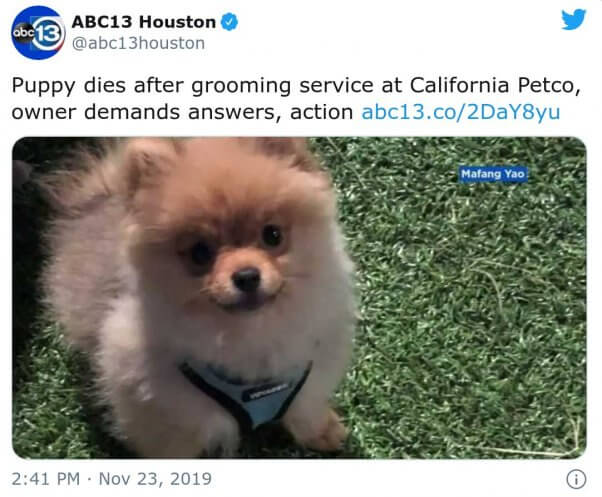 Dali died after his grooming session at Petco