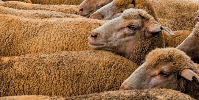 Allbirds Is All Wrong—Urge It to Ditch Wool NOW!