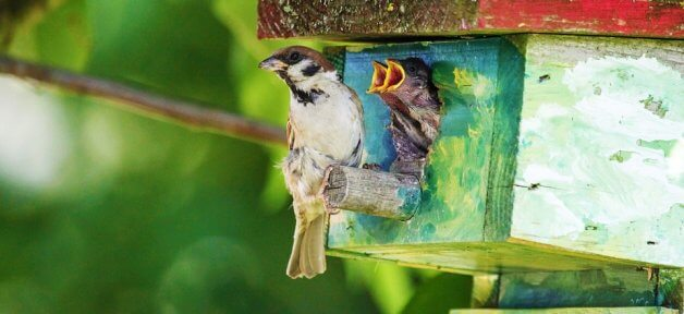 Three sparrows sit on or in a birdhouse