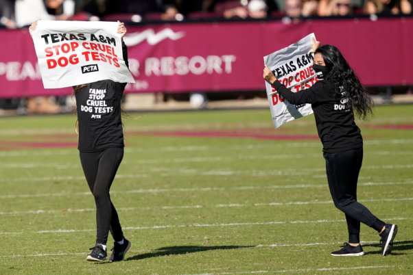Activists Arrested, Dragged Off Field Protesting TAMU Dog Experiments