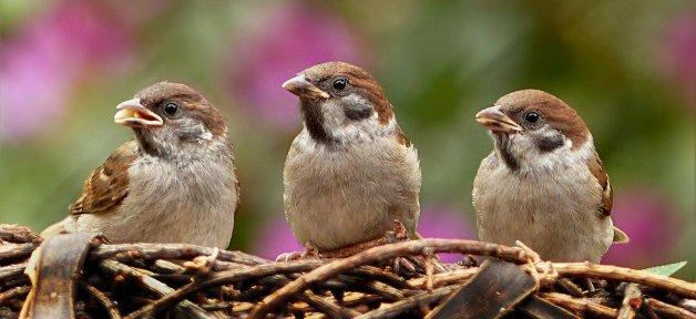 PETA sues LSU over Chrstine Lattin experiments on birds