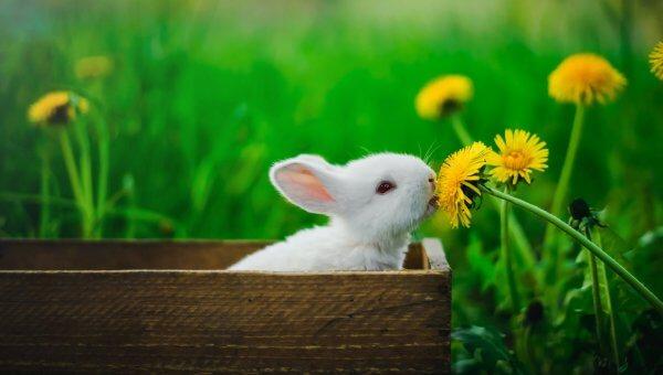PETA to NIH: Animals Are Sentient—Stop Testing on Them