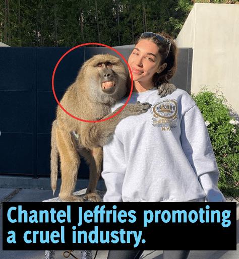 Chantel Jeffries with live monkeys