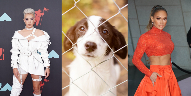 PETA Fires Back at Puppy-Purchasing Celebs With New Campaign
