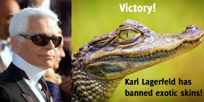 Victory! After Hearing From PETA, Karl Lagerfeld Bans Exotic Skins