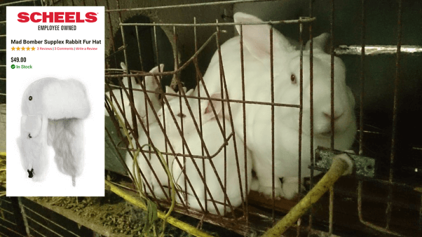 A Sheels rabbit fur hat and rabbits shown on a fur farm from PETA Asia's Chinese Fur Investigation