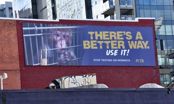 Primate Billboard in Seattle