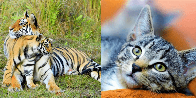 Are You a True Feline Fanatic? Take This Cat Facts Quiz to Find Out!