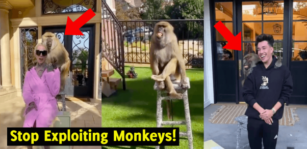 Beauty influencers pose with monkeys