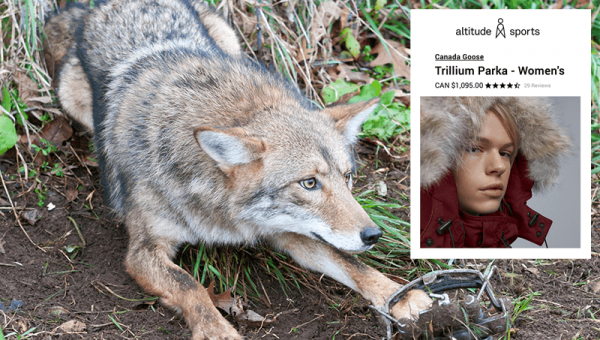 Tell SCHEELS, Shopbop, and Altitude Sports to Ban Fur NOW!