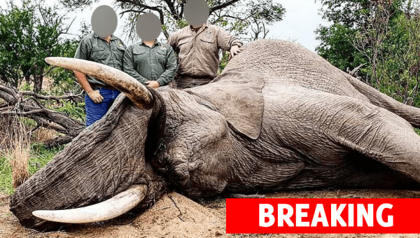 PETA Blows Lid off South African President's Secret Ties to Trophy Hunting Industry