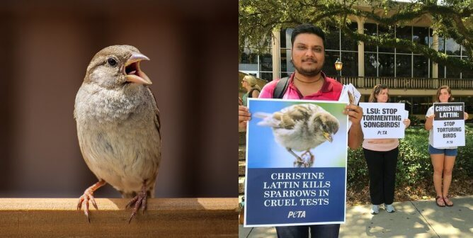 Experimenters at LSU Capture, Torment, and Kill Wild Birds