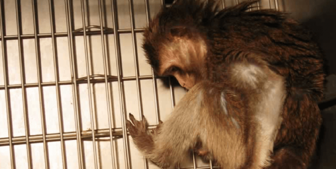 New UW Primate Center Director Was Once Suspended for Violations