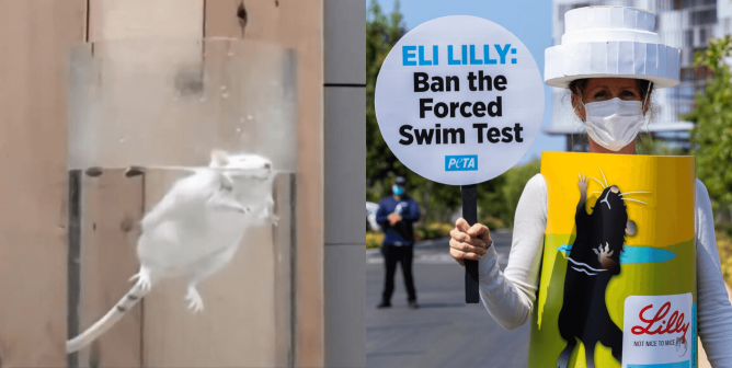 Eli Lilly: Near-Drowning Tests on Small Animals Must End