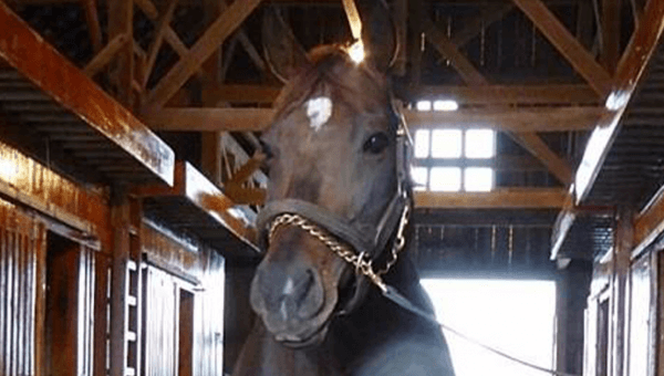 PETA Discovers That Kentucky Derby Horse Was Recently Slaughtered in South Korea!