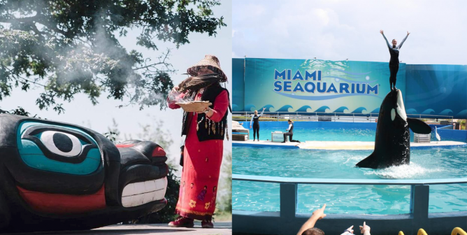 On Indigenous Peoples' Day, Teach About Native Americans' Push to Rescue Lolita