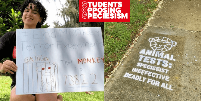 13 Ways for Students to Take Action for Animals During the Pandemic