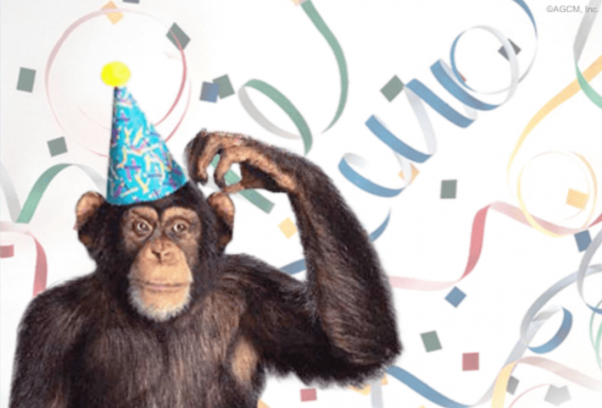 An ecard by American Greetings. It depicts a chimpanzee wearing a birthday hat, scratching his head, with streamers in the background.