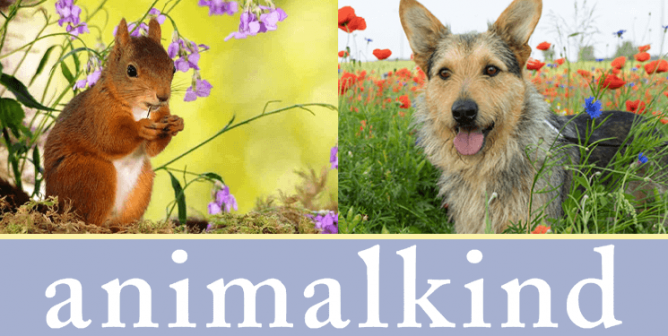 Inspirational Animals, Ingrid Newkirk, and Chocolate: This Chat Has It All
