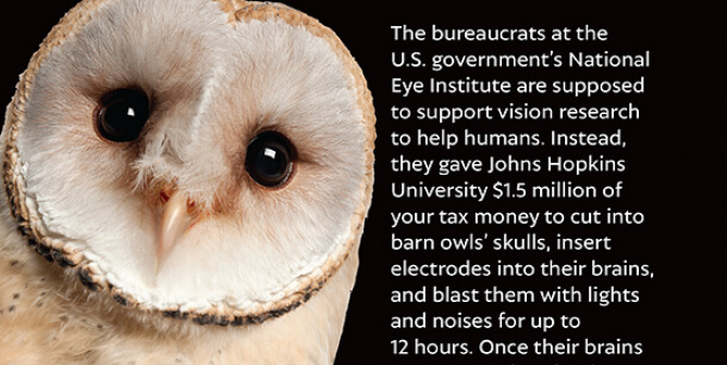 Owls Are Being Mutilated—And You Paid For It!