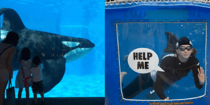 SeaWorld Cruelty