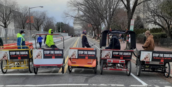 biden inauguration PETA Stop the Squeal bike ads - Washington DC