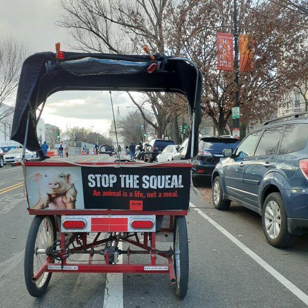 Stop the Squeal peta dc ad blitz 2021