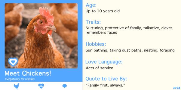 Veganuary for animals, Veganuary for chickens