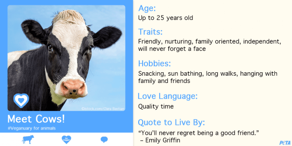 Veganuary for animals, Veganuary for cows