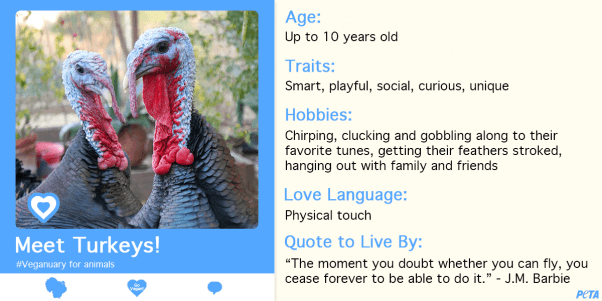 Veganuary for animals, Veganuary for turkeys