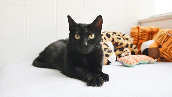 Black cat Wendy looking glamorous