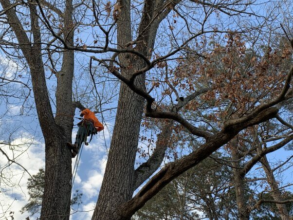 Rescuer attempting to get stray cat Wendy down from a tree