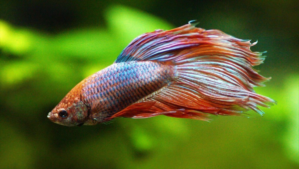 Meijer: Stop Selling Live Fish as 'Pets' NOW!