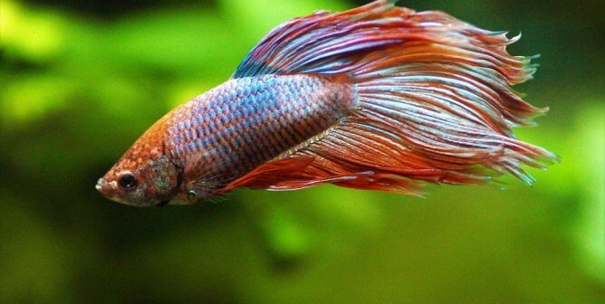Calling All Pisces (and All Other Signs!): Celebrate Fish This Season