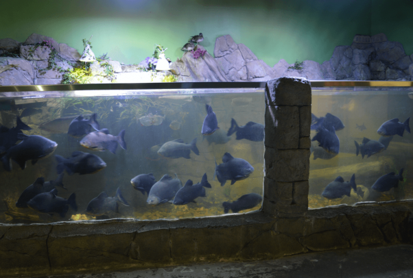 Severely crowded fish in a dirty tank at SeaQuest