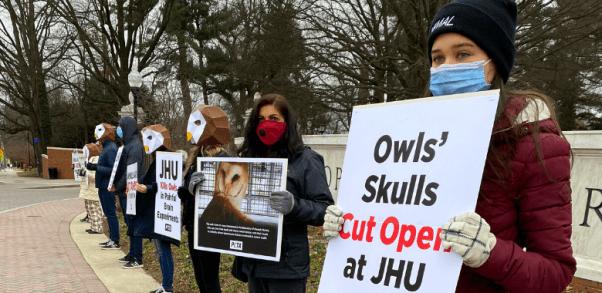 'Owls' Hold 'Screech-In' Against Johns Hopkins University