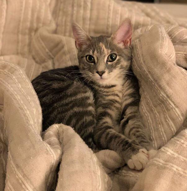 Kiki snuggled up in pillows