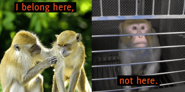 experiments on monkeys are old technology