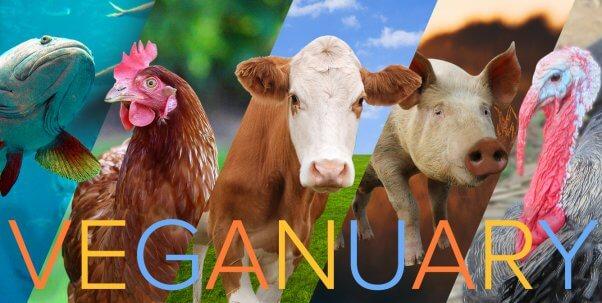 Animals of veganuary