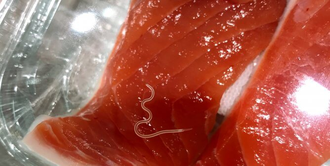 Are Parasites in Your Meal? Ditch Fish Before Your Food Feasts on You!
