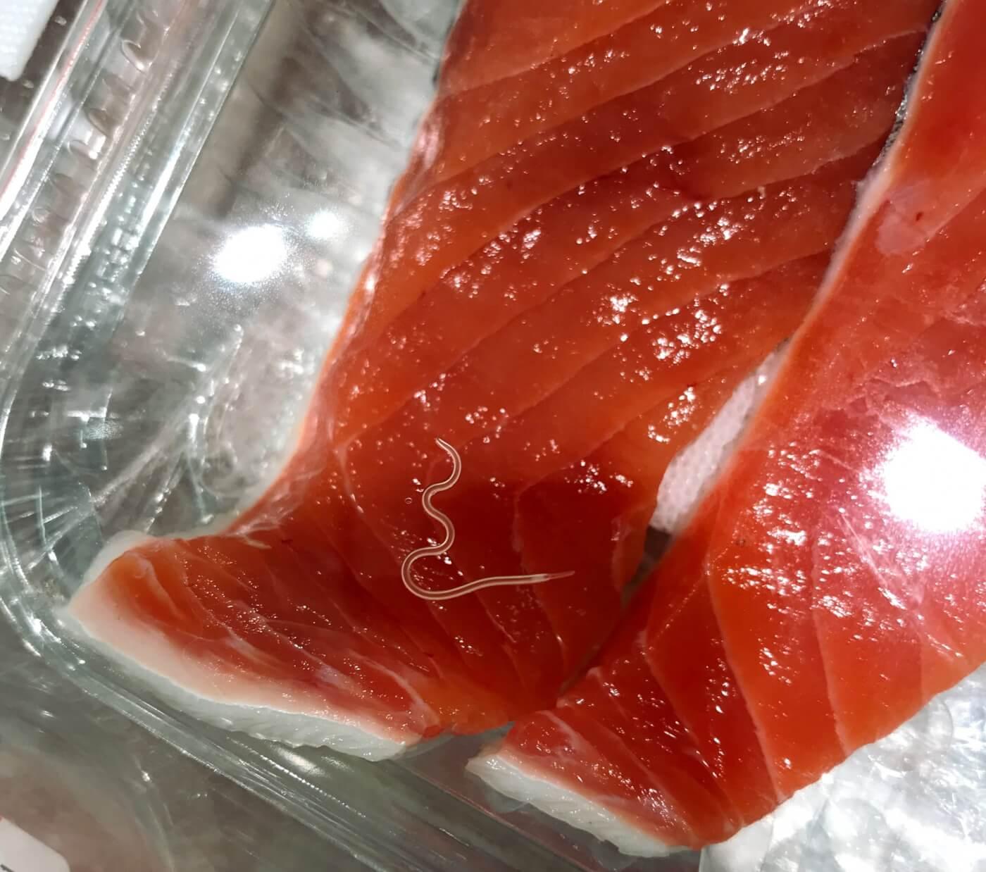 worm in raw salmon fish