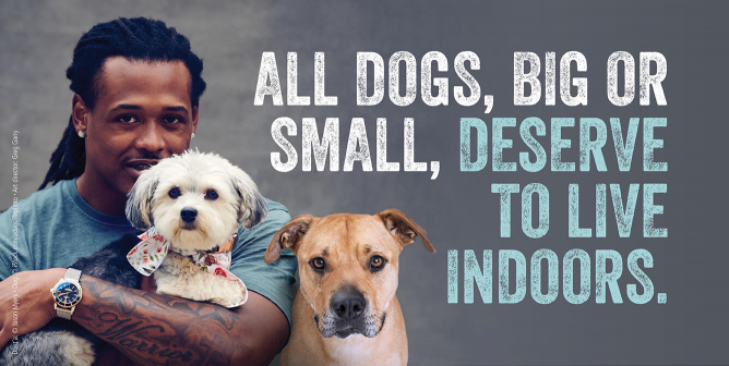 NFL Star Dont'a Hightower: ALL Dogs, Big or Small, Deserve to Live Indoors